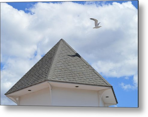 Gull Metal Print featuring the photograph Taking Off by Jessica Cruz