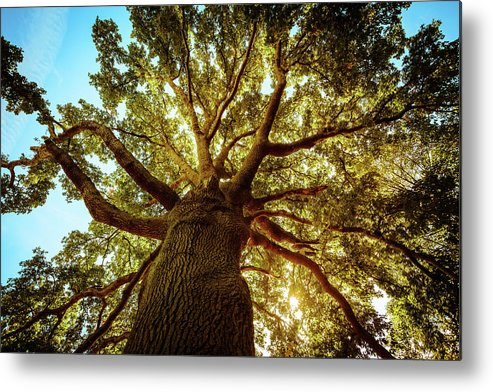 Directly Below Metal Print featuring the photograph Tall Green Tree In Spring by Zodebala