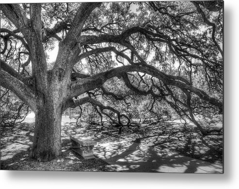Tree Metal Print featuring the photograph The Century Oak by Scott Norris