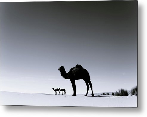 Scenics Metal Print featuring the photograph Three Camels In The Sahara Desert by Zodebala