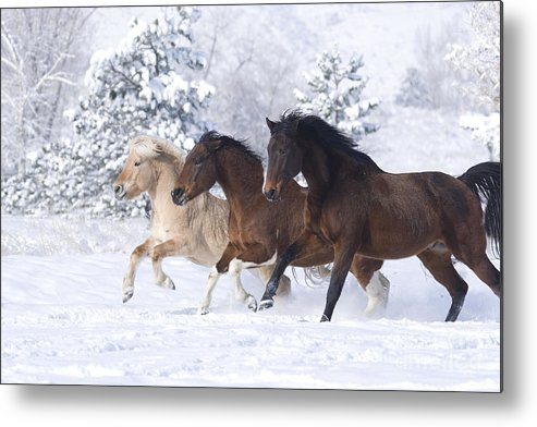 Horse Metal Print featuring the photograph Three Snow Horses by Carol Walker