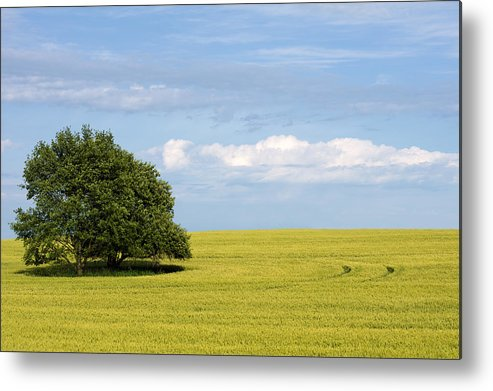 Grass Family Metal Print featuring the photograph Trees In Wheat Field by Simplycreativephotography