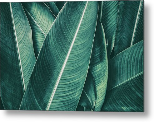 Spa Metal Print featuring the photograph Tropical Palm Leaf, Dark Green Toned by Pernsanitfoto
