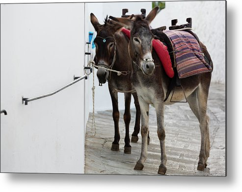 Working Animal Metal Print featuring the photograph Two Donkeys Tethered In The Street In by Martin Child