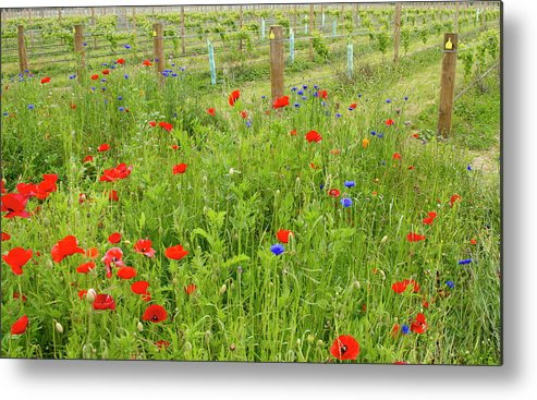 Scenics Metal Print featuring the photograph Wild Flowers Along The Edge Of A by Lazingbee