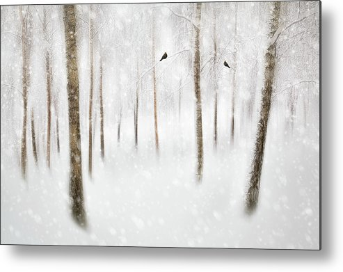 Winter Metal Print featuring the photograph Winter Birches by Gustav Davidsson