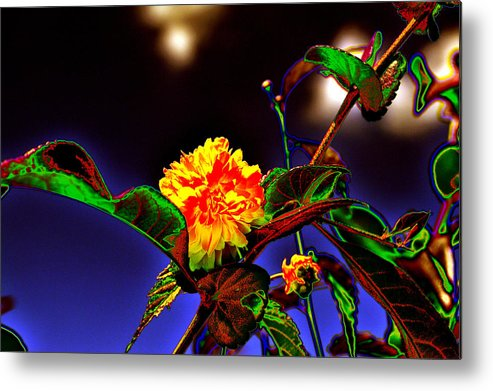 Background Metal Print featuring the photograph Yellow Queen on the morning dream by Adrian Bud
