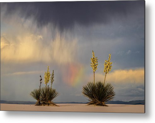 Tranquility Metal Print featuring the photograph Yuccas, Rainbow And Virga by Don Smith