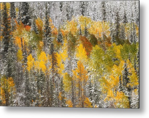 Tree - Plant - Flower Metal Print featuring the photograph Autumn Patchwork by Dennis Hammer