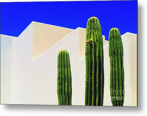 Cactus Metal Print featuring the photograph Saguaros by Gib Martinez