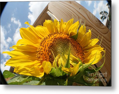 Photo Metal Print featuring the tapestry - textile Sunflower In The Breeze by David Houston