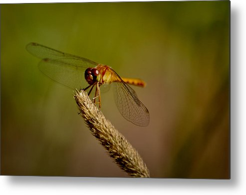 Insect Metal Print featuring the photograph Who's looking by Lisa Kane