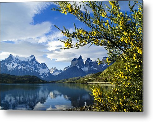 Patagonia Metal Print featuring the photograph Springtime in Torres del Paine by Michele Burgess