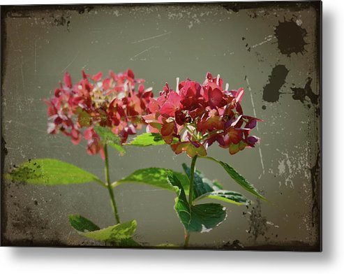 Antique Picture Of Flowers Metal Print featuring the photograph An Old Picture by Randy J Heath