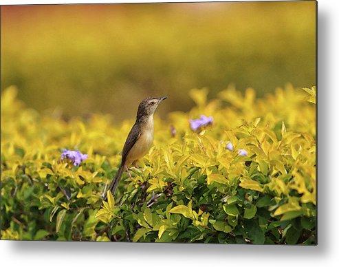 Bird Metal Print featuring the digital art Bird in a Garden by Sandeep Gangadharan