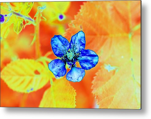 Flower Metal Print featuring the photograph Blue on Yellow by Richard Henne