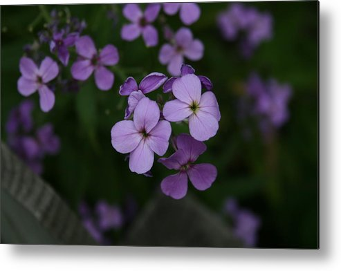 Flowers Metal Print featuring the photograph Calm in the Storm by Alan Rutherford