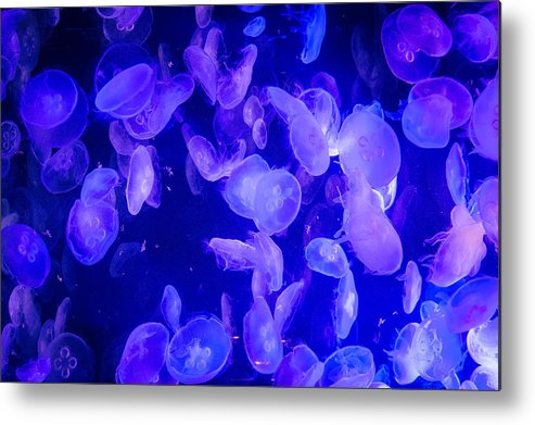 Jellyfish Metal Print featuring the photograph Chaotic by Frank Mari