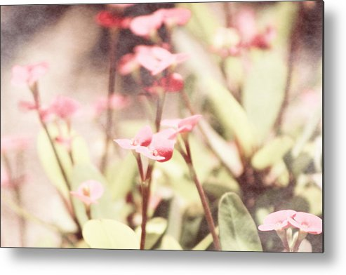 Prism Pink Metal Print featuring the photograph Country Memories in Prism Pink by Colleen Cornelius