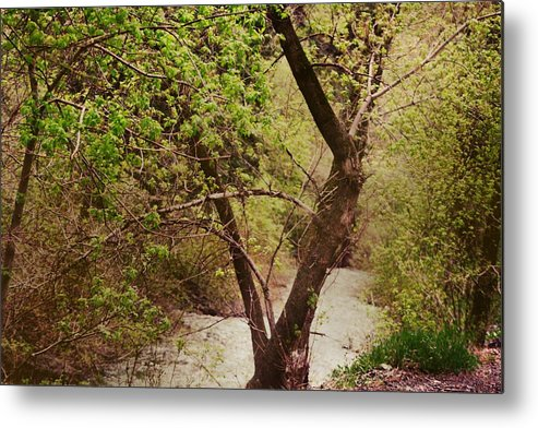 Dreamy Metal Print featuring the photograph Cozy Stream in American Fork Canyon Utah by Colleen Cornelius