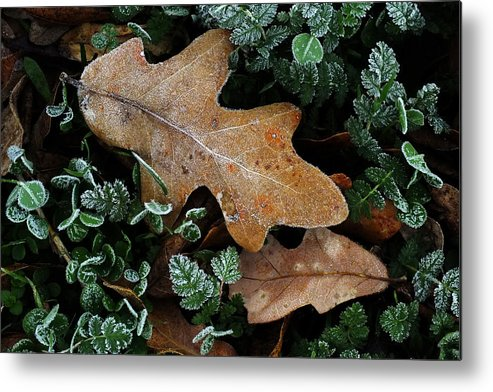 Frost Metal Print featuring the photograph December Frost by Bill Morgenstern