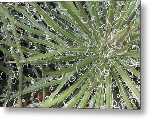 Nature Metal Print featuring the photograph Decorations by Munir Alawi