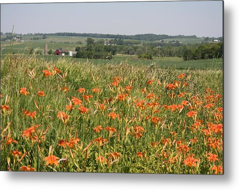 Ditch Lily View Metal Print featuring the photograph Ditch Lily View by Dylan Punke
