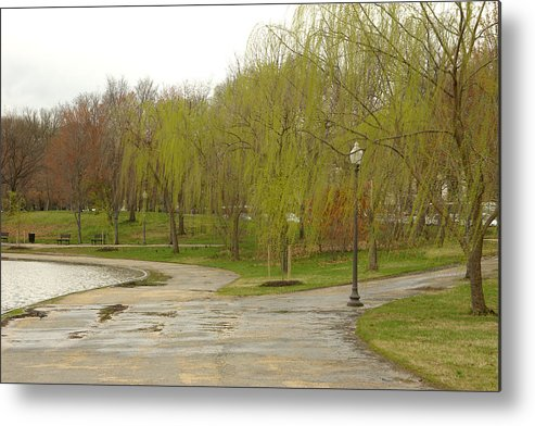 Landscape Park Washington Willow Tree Lake Metal Print featuring the photograph Dnrf0401 by Henry Butz