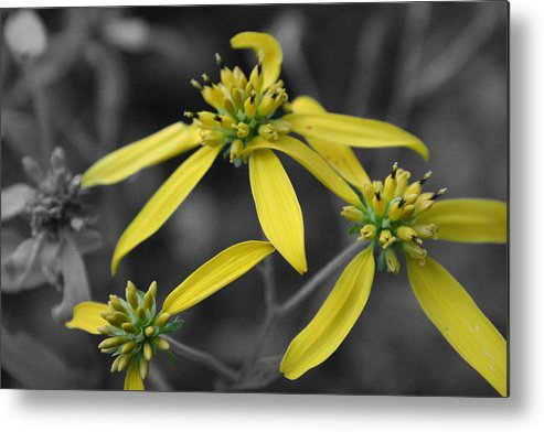 Flower Metal Print featuring the photograph Extended Family by Dylan Punke