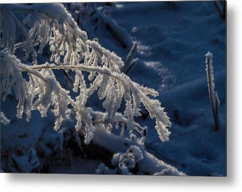 Frost Metal Print featuring the photograph First Light by Alana Thrower