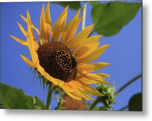 Flowers Metal Print featuring the photograph Good Morning by Alan Rutherford