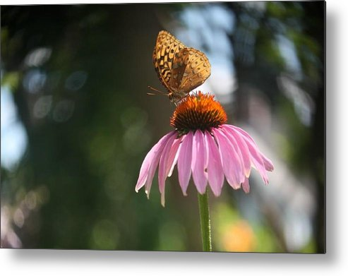 Butterfly Metal Print featuring the photograph Great Spangled Fritillary by Debra Sandstrom
