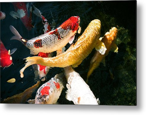 Fish Metal Print featuring the photograph Group of Koi Fish by Dean Triolo