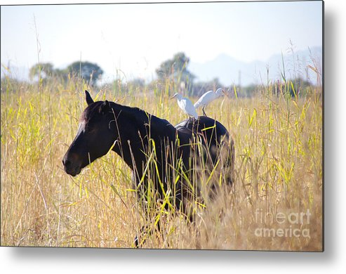 Horse Metal Print featuring the photograph Hitchhikers by Kenneth Hess