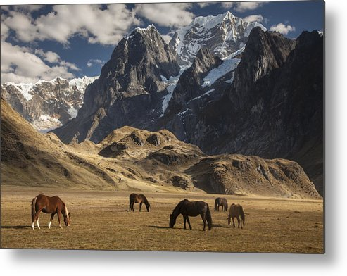 00498204 Metal Print featuring the photograph Horses Grazing Under Siula Grande by Colin Monteath