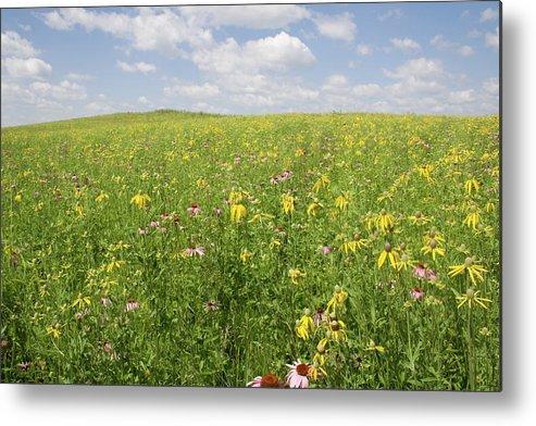 Iowa Summer Flowers Ii Metal Print featuring the photograph Iowa Summer Flowers II by Dylan Punke