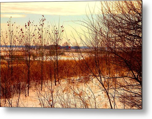 Winter Metal Print featuring the photograph Late Winter at Emiquon by Helen ONeal