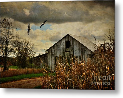 Barn Metal Print featuring the photograph On The Wings Of Change by Lois Bryan