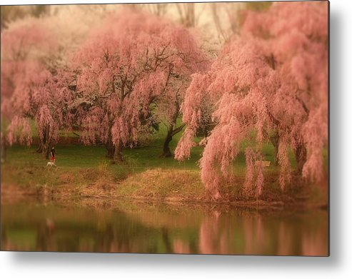Cherry Blossom Trees Metal Print featuring the photograph One Spring Day - Holmdel Park by Angie Tirado