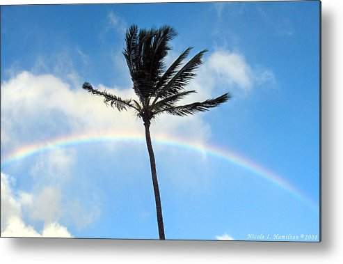 Palm Tree Metal Print featuring the photograph Palm Tree in the Sky by Nicole I Hamilton