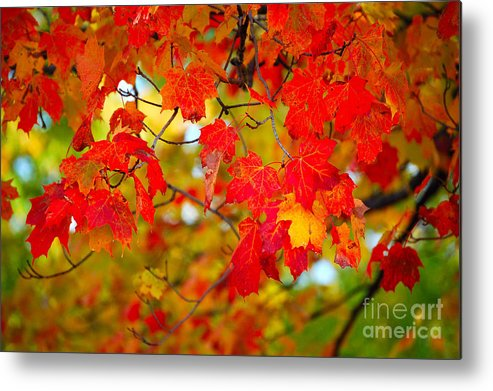 Berry Metal Print featuring the photograph Photo Synthesis by Diane E Berry