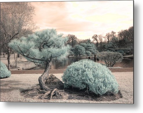 Pine Metal Print featuring the photograph Pine Tree Infrared Missouri Botanical Garden by Jane Linders