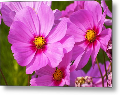 Flower Metal Print featuring the photograph Pink Flower Conspirisy by Richard Henne