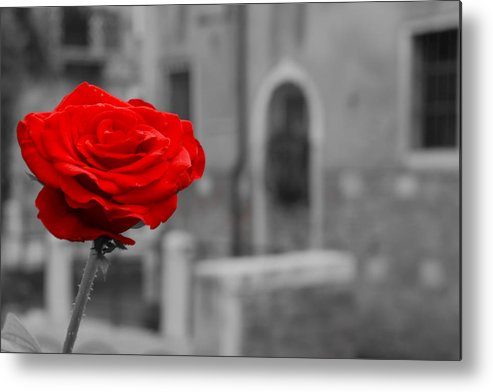 Venice Metal Print featuring the photograph Red Rose with Black and White Background by Michael Henderson