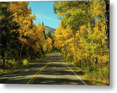 Road Metal Print featuring the photograph Road to East Glacier by Roy Nierdieck