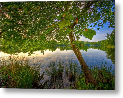 Nature Metal Print featuring the photograph Robinwood by Ches Black