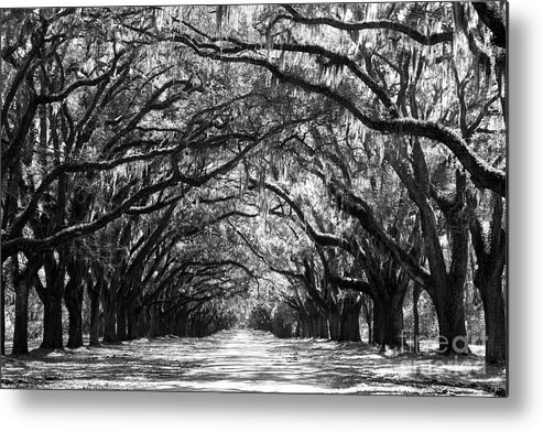 Live Oaks Metal Print featuring the photograph Sunny Southern Day - Black and White by Carol Groenen
