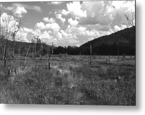 Ansel Adams Metal Print featuring the photograph swamp1-OEM by Curtis J Neeley Jr