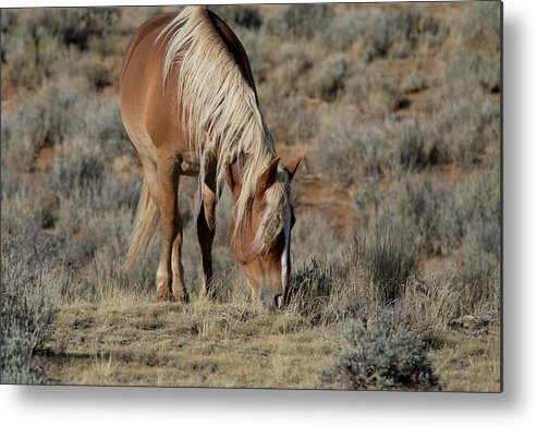 Cody Metal Print featuring the photograph The Joy of Nature by Frank Madia