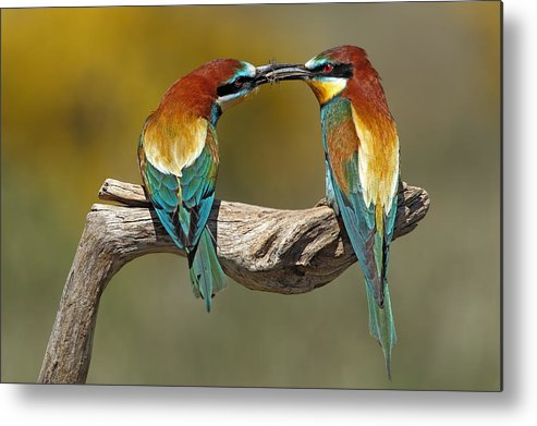 Nature Metal Print featuring the photograph True Love by Nicol?s Merino